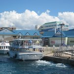 Grand Cayman Cruise Excursions - Tours