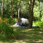 Tentsite at Sippewissett Cabins & Campground