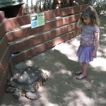 "Tortoise in the ""nursery"" at Wilderness Walk"