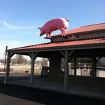 The pig on the roof