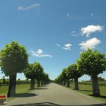 The beautiful tree lined drive