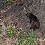 Black Squirrel in the Constiution Gardens