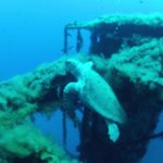Cyprus Diving Adventures