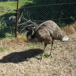 Our emus Jamie&Charmaine