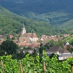 Ophorus Alsace Wine Tours Private Tours