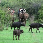 Shearwater Victoria Falls - Day Trips