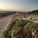 The boardwalk on Asilomar Dunes