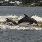 Barefoot Family Dolphin Tours & Boating Safaris