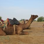 Bobby's Independent Camel and Village Safari - Private Tours