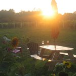 Sun setting on the vines.