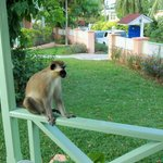                    Morning guest on our railing