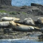                    Seals
