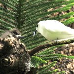 Abundant wildlife around (White Terns)