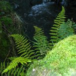                    Ferns on nearby walk
