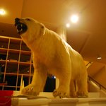                    Polar bear in the lobby. :)