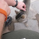 Petting the winery cat...