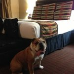 dog friendly hotel-no extra charges!