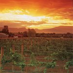Sunset in the Wine Country