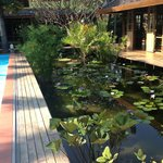 Poolarea, Waterplants and Bibliothek