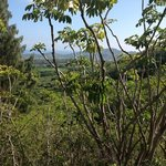  olomana trail view