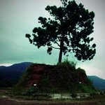 one tree hill - the highest at simalem