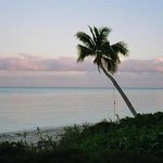 Bahama Coconut Farmの写真