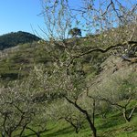 Almond trees in blossom, just outside the villa
