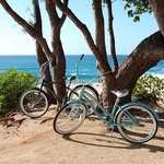 North Shore Bike Rentals