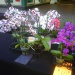                                     Beautiful orchids for sale at the Farmer&#39;s Market, my favori