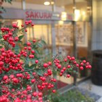 Hotel Sakura Hatagaya: Red berries beside the entrance. February 2013