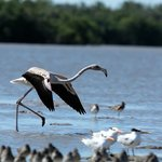 Everglades Birding - Private Tours