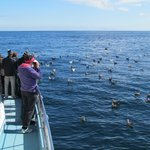 Westport Seabirds Pelagic Tours