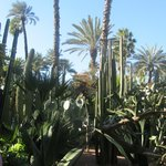                                                        La jardin Marjorelle - Maginifique