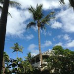                    An oasis of calm in Lahaina
