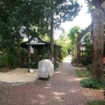                    The walkway down to the beach. Very green, serene and beautiful.