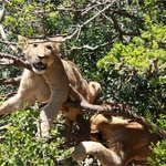 Addo/ Schotia safari special- stay 2nd night free