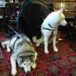                                      The dog friendly bar
