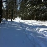  Swooshing through the snowshoe trails