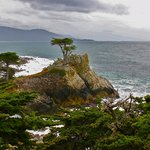  Lone Cypress and Carmel Bay