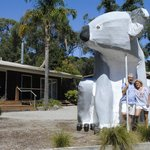 "Visitors by ""Bruce the Koala"""