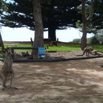                    the roos in the grounds