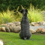  Our lovely dog Meg searching the garden for rabbits!