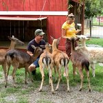 Deer Farm Exotic Petting Zoo and Riding Stables