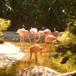                    must see the flamingoes.......