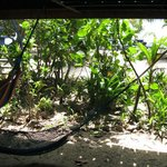 hammock just outside thr oom