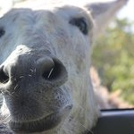 donkey getting up close and personal