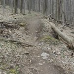                    trail along flat section