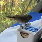 Bird trying to steal a sugar packet from us!