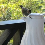 Bird sneaking up to our juice via the coffee carafe! Smart birds!