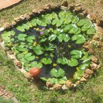 Heart shaped small pond